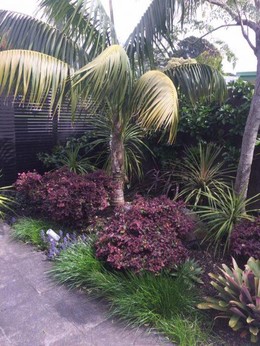 Herald Island garden maintenance