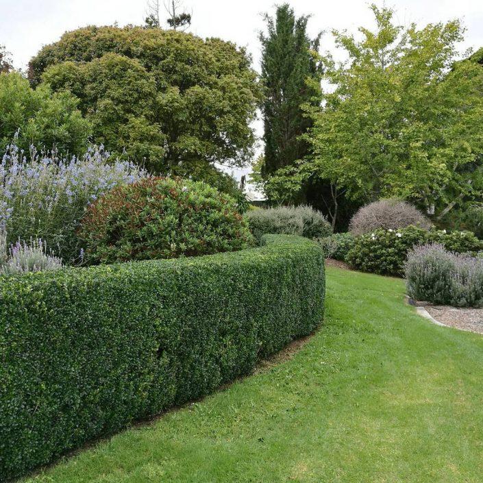 auckland garden maintenance