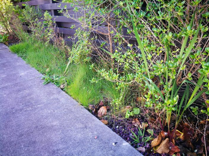 garden maintenance hobsonville point