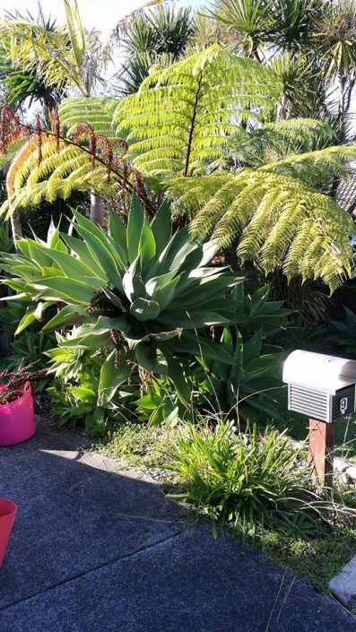 garden maintenance west auckland